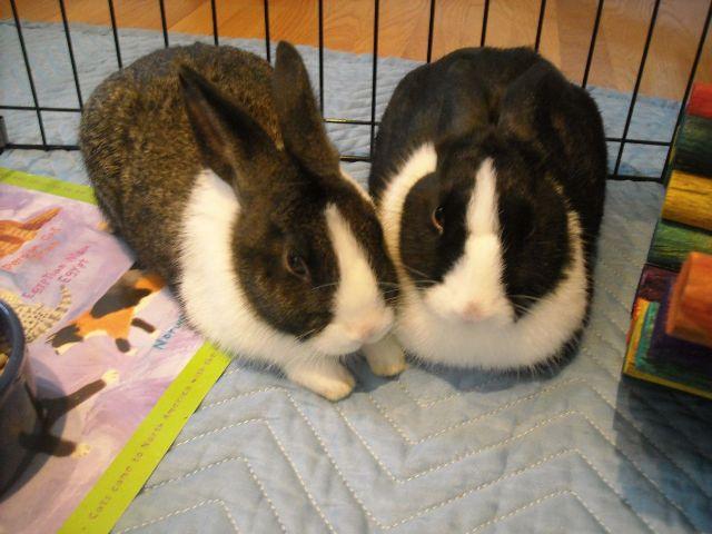 Bunny_Pic_2