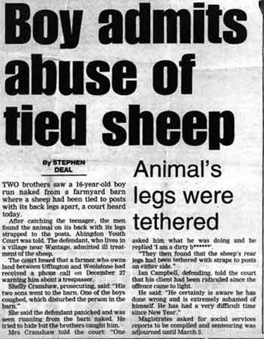 sheep-story