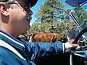 Kirkham_Cobra_-_Cattle_Drive_1.jpg