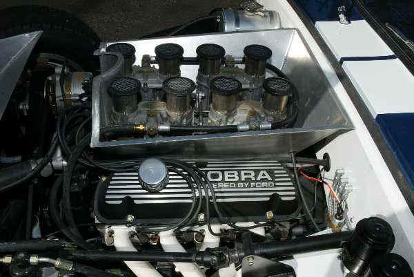 cobra6